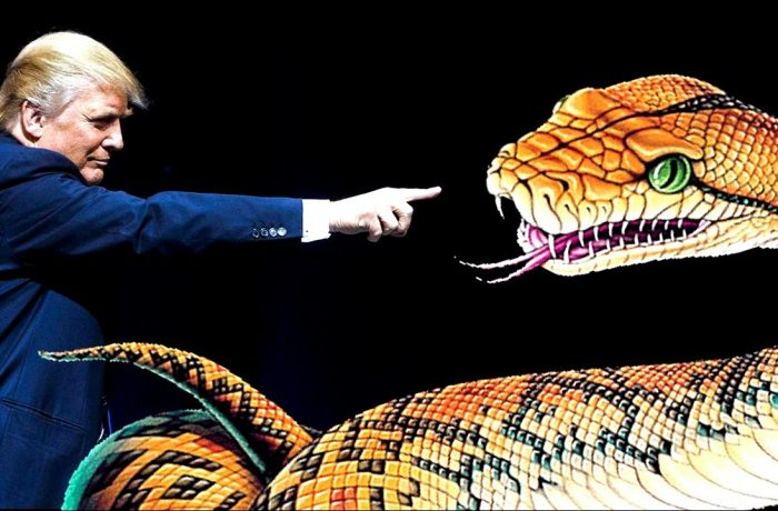 The Donald: the Serpent Seed from the Royal Bloodline/Tribe of Dan