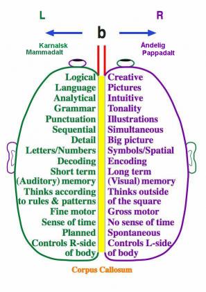 hjernehalvdeler2